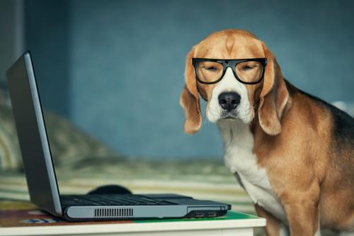 Mon chien sur le net…