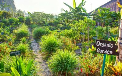 Permaculture: Cultivons nos Organisations !